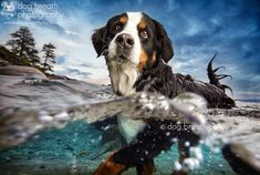 Wet Dog by Kaylee Greer on 500px