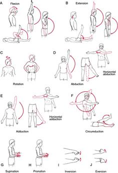 Range of Motion (Angles) from Speaking of.....OT Pinned by SOS Inc. Resources @sostherapy http://pinterest.com/sostherapy.