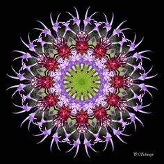 Mandala ''Kornblume''  von kKreativesbyPetra   #mandala #inspiration #entspannung #kornblume #natur #nature #innereruhe  #foto #photo #fotografie #naturfotografie #makro #makrofotografie #macro #macrophotogaphy #garten #garden #sommer #summer #Spiegelung #Reflexion #photoshop #canon #canonEOS Petra, Canon, Photoshop, Plants, Inspiration, Mandalas, Macro Photography, Nature Photography, Mosaic