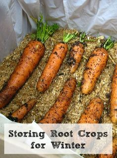 moss, or sand. Place a layer of insulation on the bottom of the box and then a single layer of your root crop (carrots, potatoes, beets, etc...