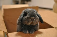 Omg reminds me of my funny bunny clover!!! Miss him.