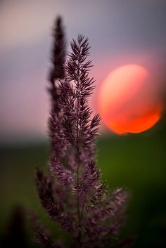 sunset by Tilo Ladwig on 500px
