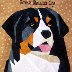 silver linings canine corner bernese mountain dog