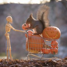 red squirrel with pumpkins and shopping cart and a skeleton