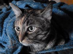 Bella Dots Freesia bundled in the Care Bear blanket