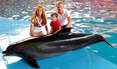 дельфинарий лазаревское