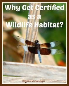 "I added ""Why Get Certified as a Wildlife Habitat? - Little "" to an #inlinkz linkup!http://littlesproutslearning.co/why-get-certified-as-a-wildlife-habitat-2/"