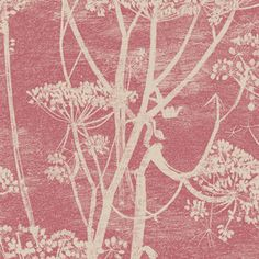 Cole & Son 66/7052 New Contemporary Cow Parsley