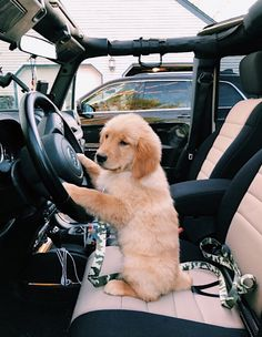 Wonderful No Cost dogs and puppies golden retriever Style Carry out you care about your pet? Appropriate doggy health care plus coaching will ensure Super Cute Puppies, Cute Little Puppies, Cute Dogs And Puppies, Cute Little Animals, Cute Funny Animals, Baby Dogs, Funny Dogs, Doggies, Puppies Puppies