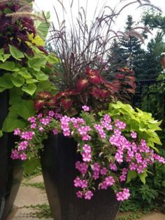 Gorgeous Full Sun Container Plants Ideas To Make Up Your.- Gorgeous Full Sun Container Plants Ideas To Make Up Your Garden Container garden ideas - Full Sun Container Plants, Full Sun Plants, Container Flowers, Flower Planters, Garden Planters, Container Gardening, Flower Pots, Flower Ideas, Porch Planter
