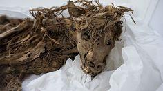 Resuelven el misterio del entierro masivo de perros en el Perú precolombino - RT