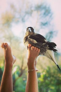Loyal Rescue Bird Always Flies Back To Her Humans