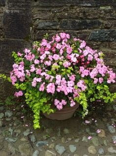 Impatients & creeping jenny..a must have for a shady garden