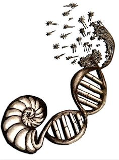 New Tattoo Inspiration: Fibonacci Spiral turns into DNA strand