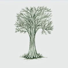 East and Sixty Eight | Illustrated tree drawing
