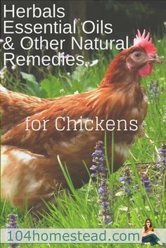 What my chickens consume, my family consumes. That's why I prefer to try herbals, essential oils, and natural remedies before bringing out the big guns.