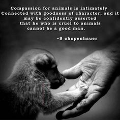 Compassion for animals is intimately connected with goodness of character; and it may be confidently asserted that he who is cruel to animals cannot be good. –s chopenhauer | #SnoodyLadiesDon'tLikeDogs which is very telling of their character.