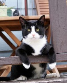 Black and white cat just chillin'.