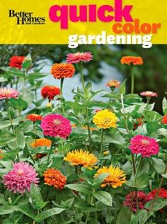 Better Homes and Gardens Quick Color Gardening by Better Homes and Gardens: Why wait for spring to see color in your garden when you can keep it beautiful year-round? How to fill your garden with gorgeous color all year long. Quick Garden, Garden Shrubs, Shade Garden, Container Gardening, Flower Gardening, Gardening Books, Ornamental Plants, Garden Inspiration, Garden Ideas