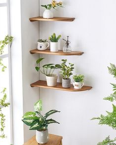 New Floating Shelves Design House Plants Decor, Plant Decor, Vertical Wall Planters, Vertical Gardens, Diy Home Decor, Room Decor, Plant Shelves, Shelf Design, Indoor Plants