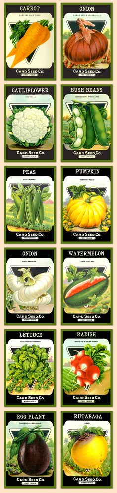 Vintage seed packets for vegetables. Available for purchase as quilt blocks in various sizes at oldeamericaantiques.com.
