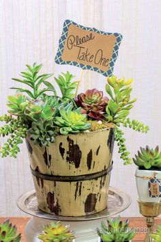 Going green?  We suggest starting with trendy, easy-to-arrange succulents! Plants In Jars, Succulents In Containers, Container Plants, Planting Succulents, Container Gardening, Plant Projects, Spring Projects, Garden Projects, Garden Ideas