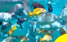 Kauai Snorkeling :: Snorkel Tours in Kauai
