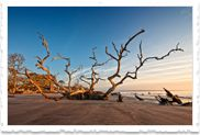 Driftwood Beach on Jekyll Island, GA, it is AMAZING! You can walk for a mile or more and never run out of huge amazing pieces of driftwood to see, it is such art! A must see if you ever visit, go at low tide and walk fast so your back before the tide comes in. :)