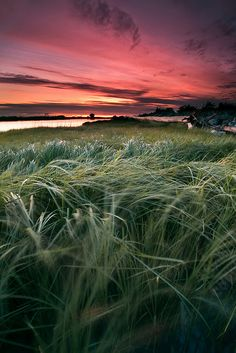 Sunset at Garry Point in Richmond, Canada. The wind picked up and swayed the grass. Richmond Canada, Love Scenes, What A Wonderful World, Fauna, Mother Earth, Wonders Of The World, Moonlight, Point Richmond, Fields