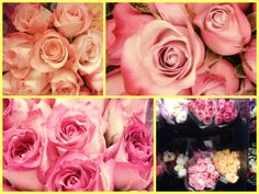 Beautiful roses at Kroger's.   By Shelly Morrissette 2014
