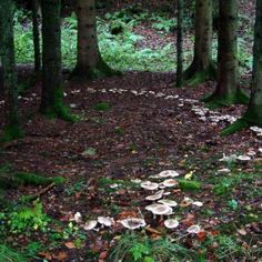 Rings: A magic portal or a lethal trap? - Magical Recipes Online Fairy Rings: A magic portal or a lethal trap? Fae Aesthetic, Fairy Ring, All Nature, Faeries, Wicca, Stuffed Mushrooms, Scenery, Landscape, Writing Inspiration
