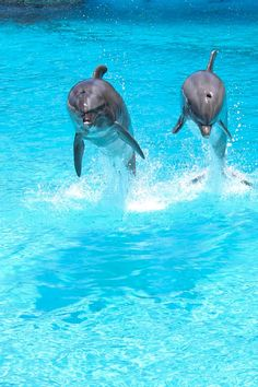 Sea Life Park, Swim with Dolphins - http://www.sealifeparkhawaii.com/