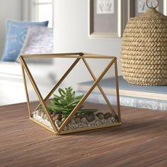 Desktop Succulent Plant in Glass Terrarium