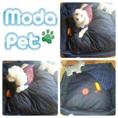 MEU PET NA MODA   Floquinho curtindo a Cama Índigo, o Cobertor Especial e o Brinquedo de Látex Hot Dog #meupetnamoda (mamãe: Odila)