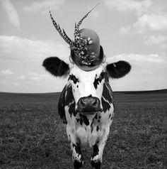 Meet Hermione, the Very Stylish Cow, photo by Jean-Baptiste Mondino