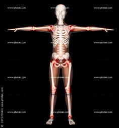 esqueleto de una mujer - Buscar con Google