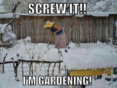 I'm a huge gardening fanatic and I can relate to these memes so much! Here are 30 Gardening Memes that will make you want to garden right now Funny Quotes, Funny Memes, Jokes, Sarcastic Quotes, Gardening Memes, Gardening Tips, Flower Gardening, Garden Quotes, Winter Garden