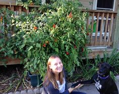 """Congratulations To Our 13th Weekly Winner, Shirley G., from Sauk Rapids, MN!  """"The plants were thriving and had spread across the porch 8 feet wide and 6 feet tall. Since there were far too many tomatoes for us to eat, I would ask the home care staff if they would like to pick some tomatoes to eat on the way to their next patient. I am so pleased with my GrowBox purchase two years ago.  I'm hoping to add another one next year.""""   Send in your photo's now to photos@aGardenPatch.com."""