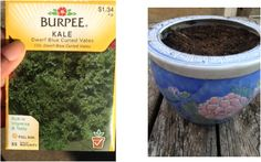 How to Grow Kale! #gardening