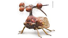 "The Brazilian Treehopper    Yep, it's a real thing. Google it!  That crazy ornament thing on its body isn't some weird antenna, instead those ""balls"" are hollow spheres of chitin probably to try and scare away predators. Would you want to chew on that? And those bristles surrounding the spheres are most likely used for some unknown tactile function.    Read more at Why Evolution is True"