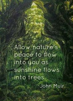 Allow nature's peace to flow into you as sunshine flows into trees. John Muir: Tree Quotes, Quotes Quotes, Qoutes, Quotes About Trees, Quotes About Nature, Green Nature Quotes, Start Quotes, Photo Quotes, John Muir Quotes
