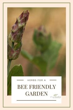 Planting bee friendly herbs Outdoor Plants, Outdoor Fun, Garden Plants, Outdoor Gardens, Beekeeping For Beginners, Gardening For Beginners, Gardening Tips, Container Gardening, Bee Friendly Plants