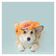 Crab hats are so hot right now.