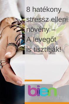 8 hatékony stressz elleni növény – A levegőt is tisztítják!