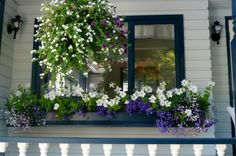 Curb Appeal - If your window is long and low, you've got to balance it with a shallow but lengthy window box. Make sure the box extends at least a few inches out from the base of the window to create a pleasing line. There is nothing worse than a top-heavy window over a dinky window box.