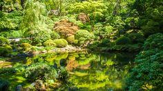 Música Relajante de la Naturaleza con Sonidos de Agua: Meditación, Yoga,...