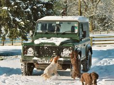 Land Rover and Dogs