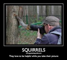 Squirrels humor | Jokes Funny Pictures Absurd Animals Squirrel Scouts