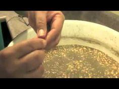 Making Seneca style corn soup. With narration in the Seneca Language. American Food, American Recipes, Indian Food Culture, Indian Food Recipes, Healthy Recipes, Native Foods, American Indians, Native American, Corn Soup