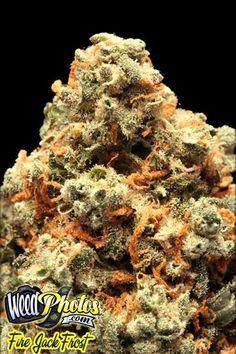 Fire Jack Frost Marijuana Strain Pictures